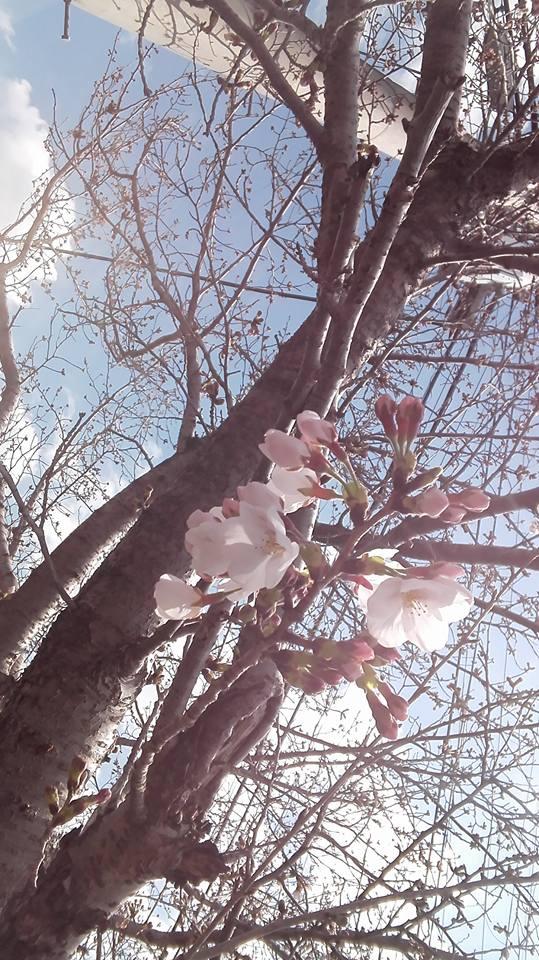 「春はすぐそこまで」  最近のチェンジングライフの活動を報告させていただきます。