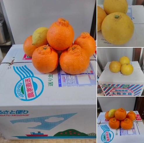 果物の贈り物